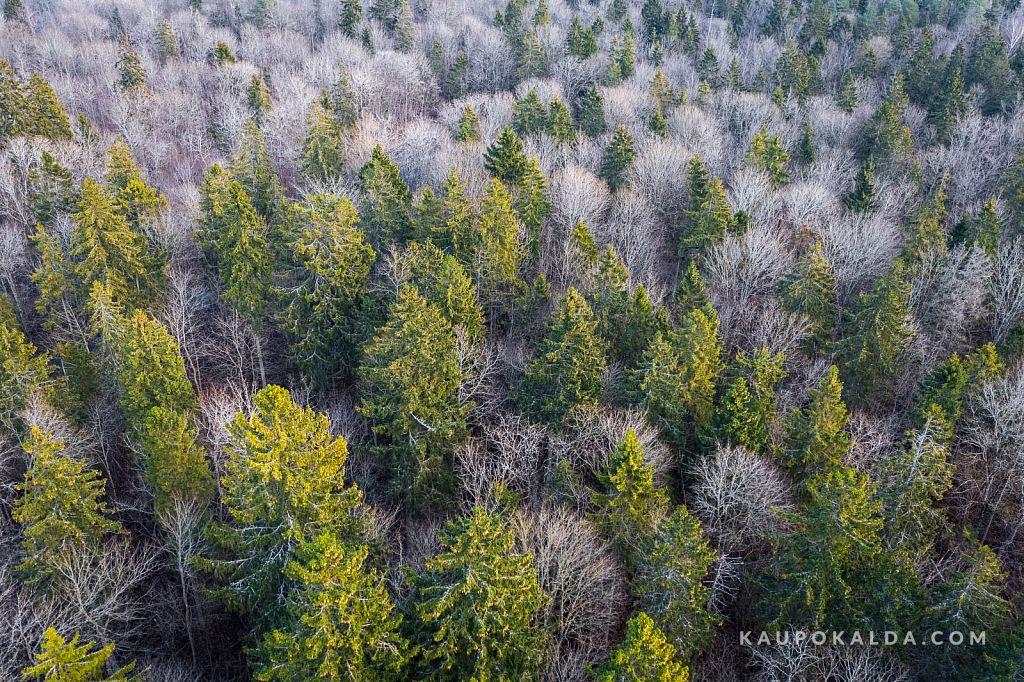 Metsatukk. Mets tukub.